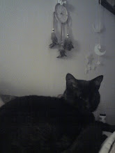 Mi gato Salem