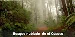 Bosque Cusuco