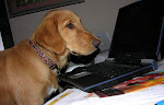 Mogley writing his blog