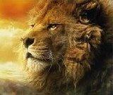 Este é o leão da tribo...