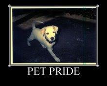 Pets Pride Meme