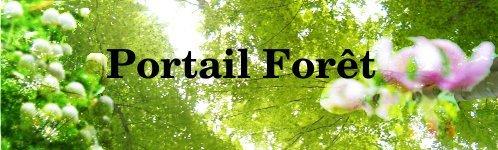 Portail forêt-environnement