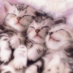 http://2.bp.blogspot.com/_y4bC6-uVGFM/SLQO45ZYZ1I/AAAAAAAAAFo/fN8Fwp55aDU/s400/kittens+of+cuteness.jpg