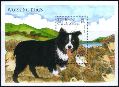 1996年タークス・カイコス諸島 ボーダー・コリーの切手シート