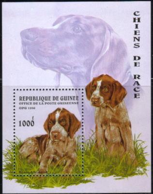 1996年ギニア共和国 ジャーマン・ポインターの子犬の切手シート