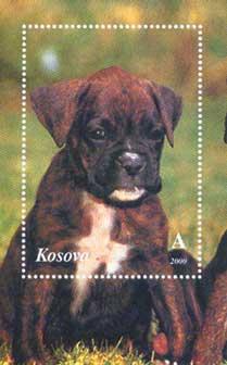 2000年コソボ自治州 ボクサーの子犬のラベル