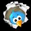 Follow the little birdie!