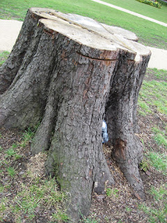 http://2.bp.blogspot.com/_y5PMGwfCt9I/RmSLHkwBKmI/AAAAAAAAA2E/qml1pn6cqJs/s320/stump1.jpg