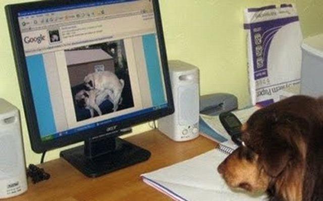porn funny. Dog Porn. | 6:12 AM | Funny