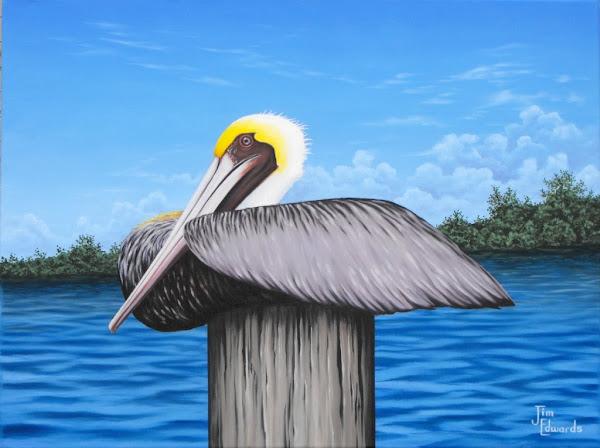 Pelican Sitting 18 x 24