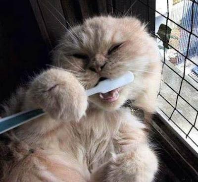 Cat hygiene