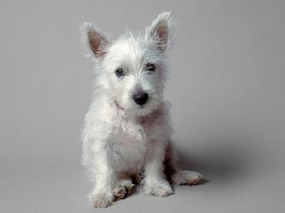 fotos chorra Perro+blanco
