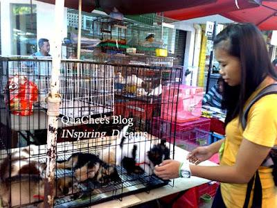 gaya market pet dog
