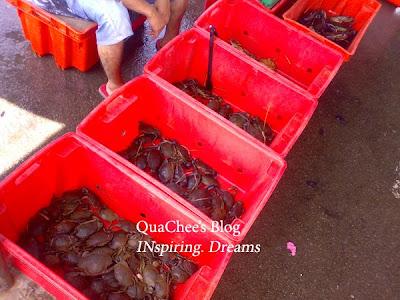 kk market, crab