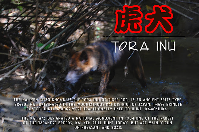 Kai Ken: The Tora Inu