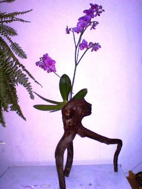 Raiz para orquídeas