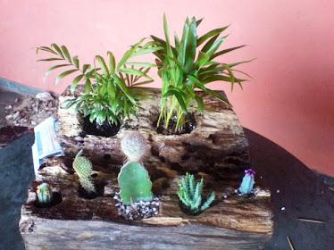 Tronco com cactus