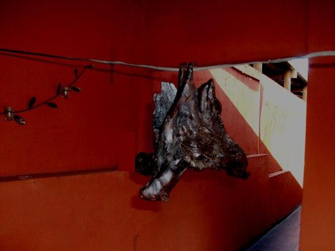 Morcego equilibrista
