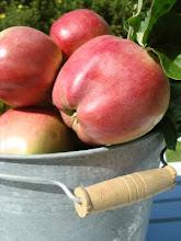 Älskar äppel,päppel....