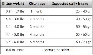 kittens nutrition