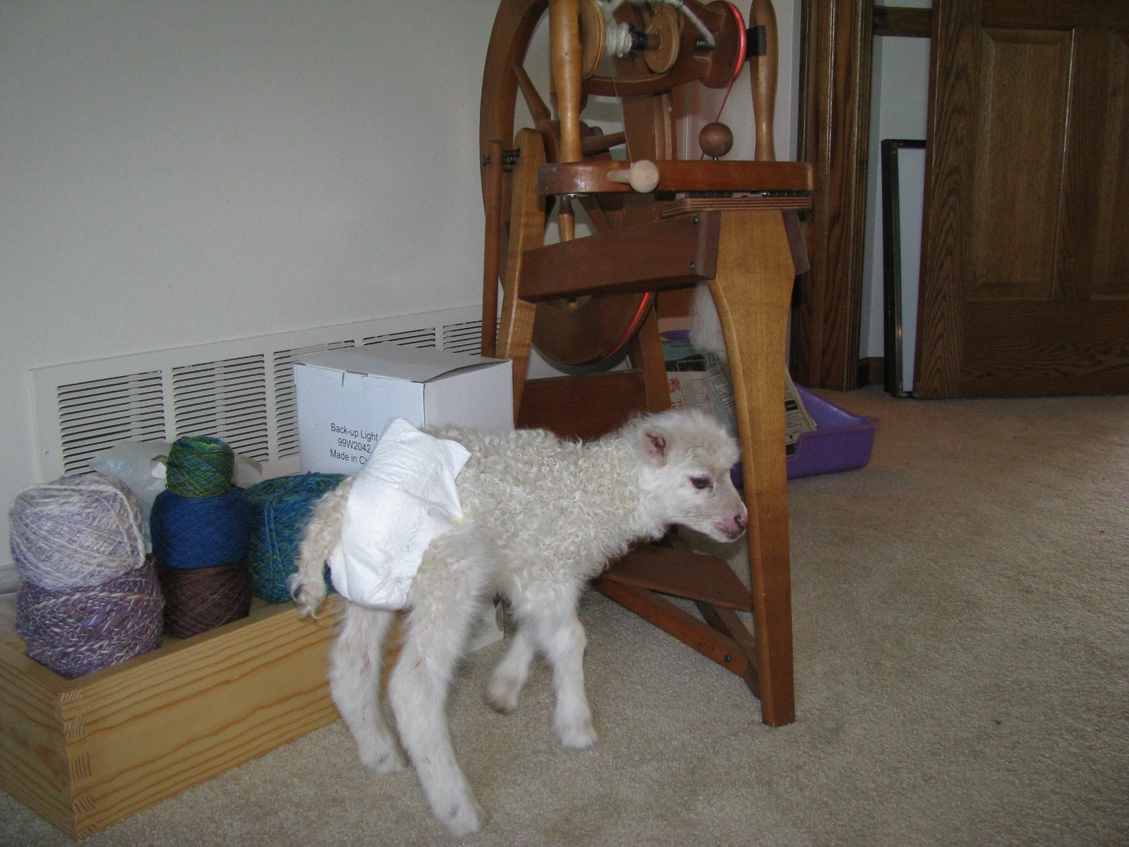 Toddlers Wearing Diapers http://chooksiniowa.blogspot.com/2011/01/diapers-for-goat-kids-and-lambs.html