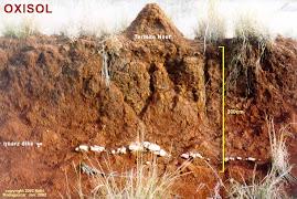 Tipo de suelo de la ecorregion: Ultisoles u oxisol