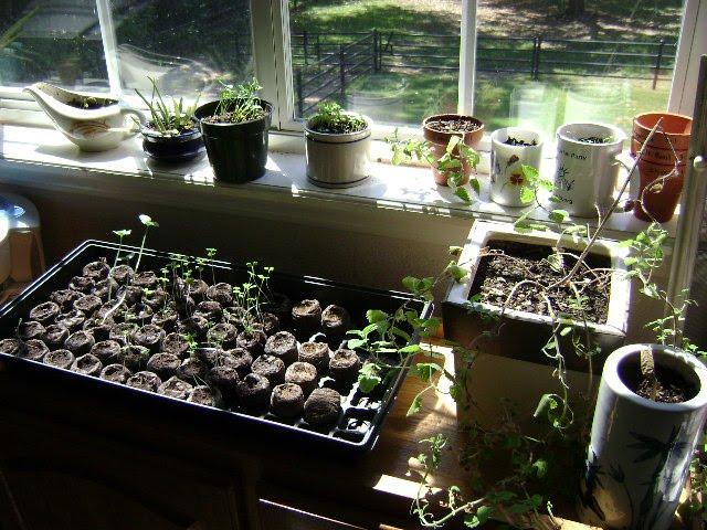 Eco friendly freckles indoor herb garden in our bedroom for Eco indoor garden house