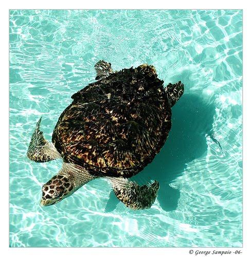 Tarta rughe belle immagini for Letargo tartarughe acquatiche
