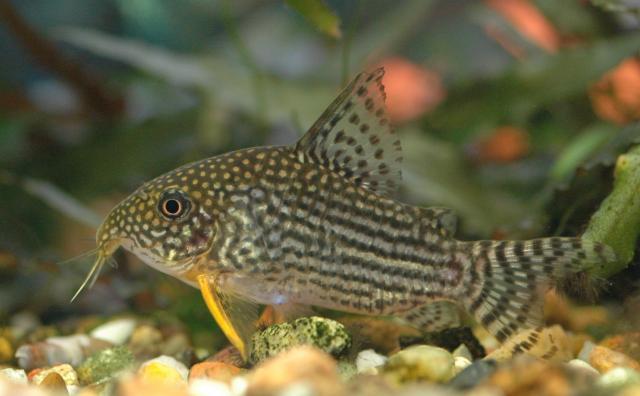 Mijn aquarium  Vissen