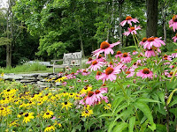 native plants and native flowers in the garden