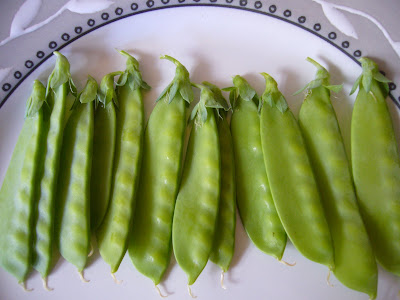 Snow peas at 2 Green Acres, a Maryland garden