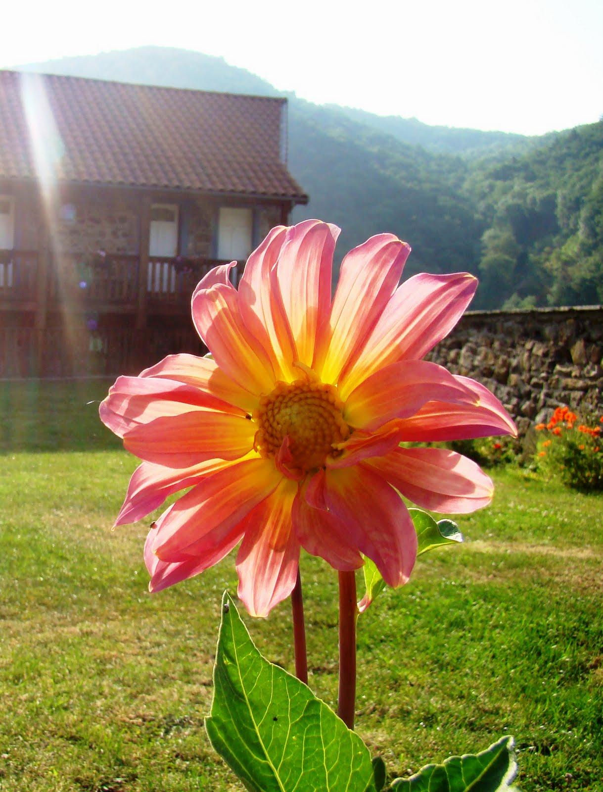 Le jardin de catherine les derni res fleurs - Le jardin de catherine com ...