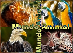 Primer Aniversario de Mundo Animal
