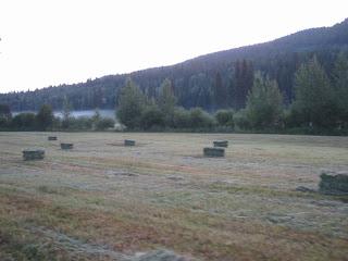 field+3 Bringing in the Hay