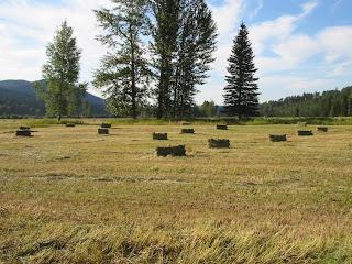 field+5 Bringing in the Hay