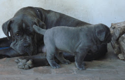 Con Mamá