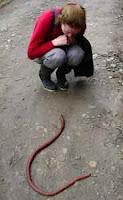 Palouse_earthworm_giant_nightcrawler_image