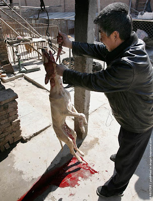 China Dog market