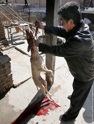 China Dog market
