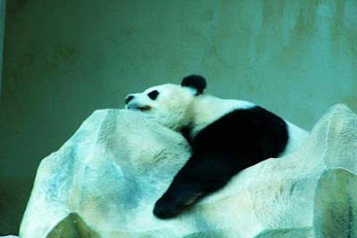 Sleeping animals photo