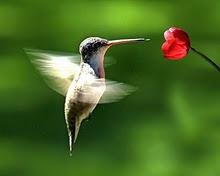 blog power-mantra una ola de amor divino