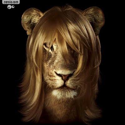 Resultado de imagem para leonina