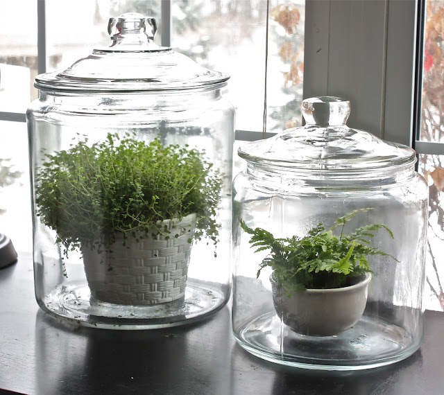 Diy Mason Jar Terrarium S T A R D U S T Decor Style