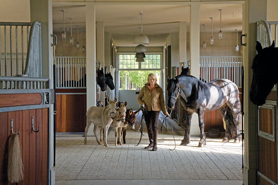the stables with her horses and donkeys all from canada the stable