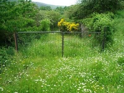 Centro cristiano el huerto podar el pasto - Cortar hierba alta ...