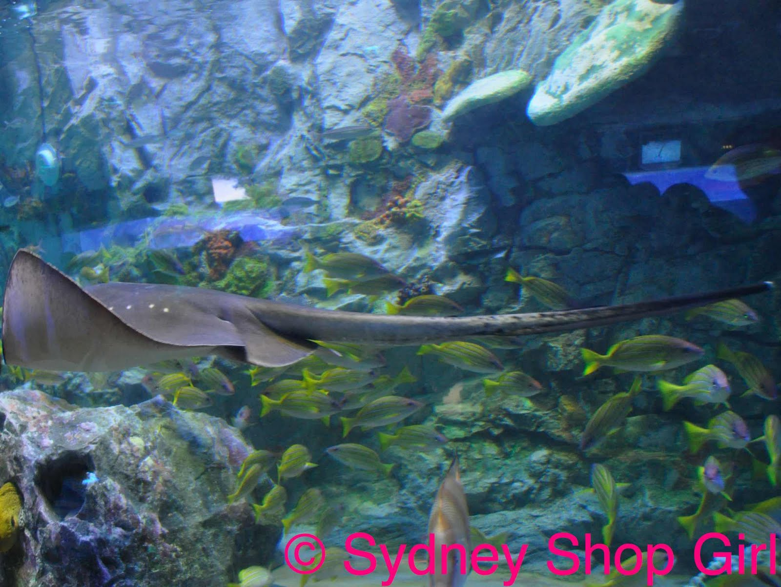 Sydney Shop Girl Distracted Thoughts The Calm Exuded By Aquatic Life