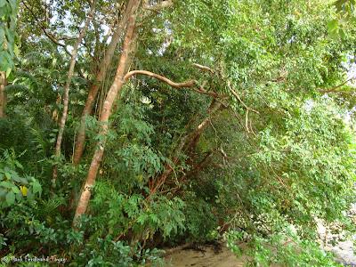Bintan Mangrove Photo 7