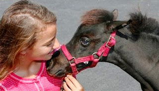 KBuck miniature horse with prosthetic eye