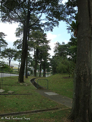 Singapore Trees Picture 4