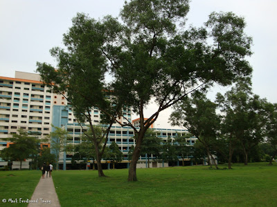 Singapore HDB and Trees Photo 4